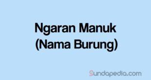 Ngaran Manuk atau Nama Burung Bahasa Sunda
